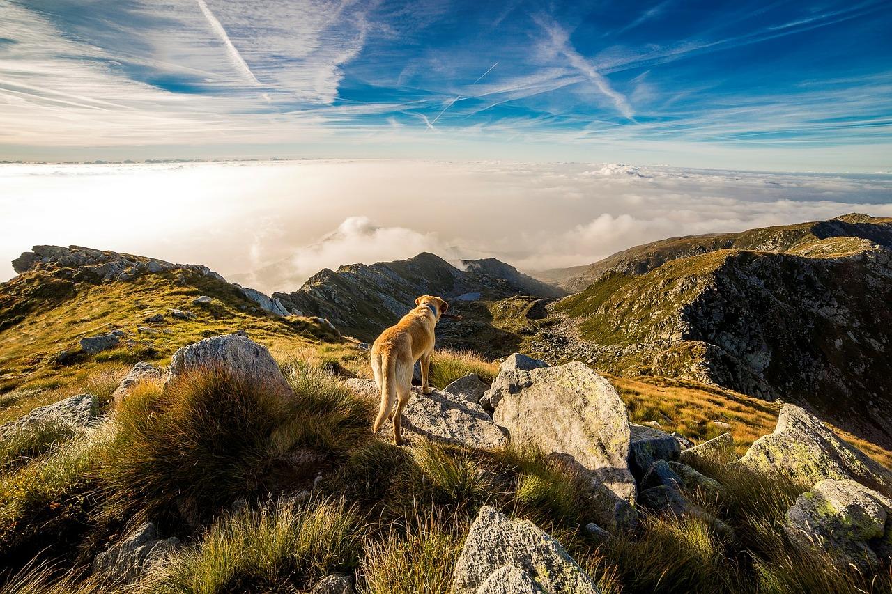 Dog on Colma di Mombarone. Photo by Dan Fador.