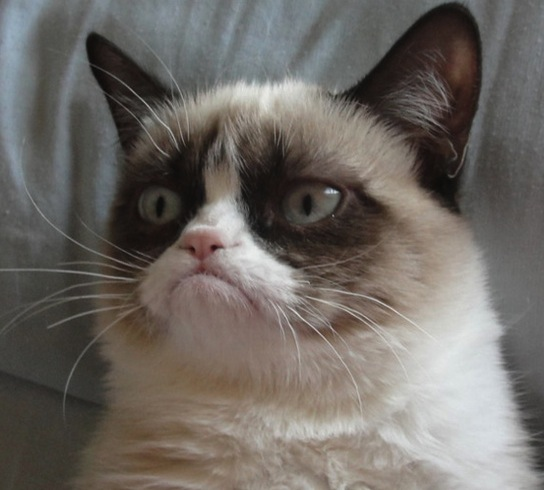 I'm with you, Grumpy Cat.