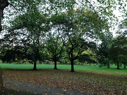 Green Park. I thought these three trees looked like a good trysting spot...