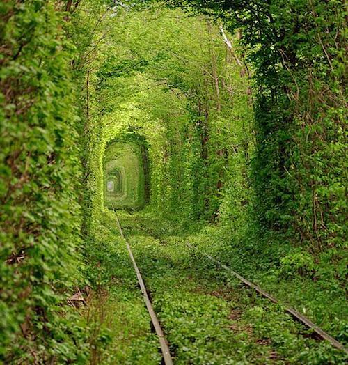Tunnel of Love, Ukraine Image credits: Oleg Gordienko