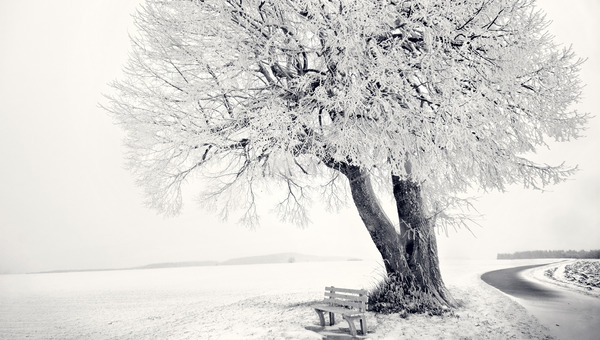 bench-under-a-snowy-tree-524-600x340