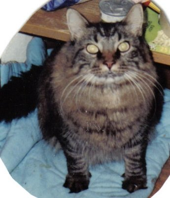 My beloved 1st cat, Einstein.