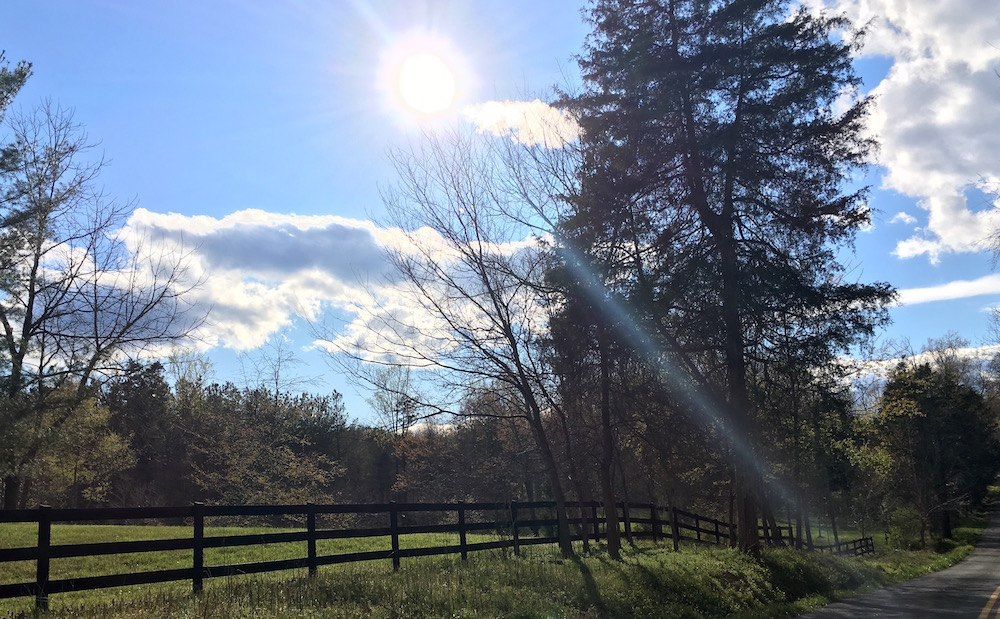 The sun-dappled trees delighted my eye.